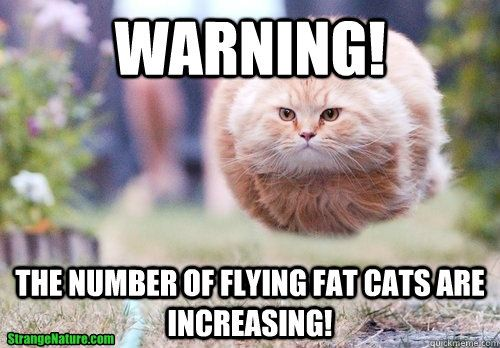 The number of flying fat cats are increasing