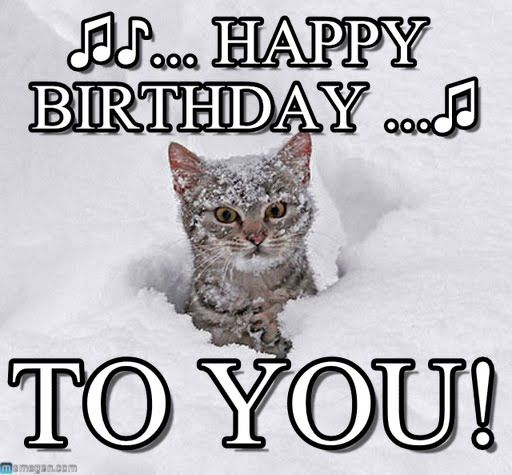 happy birthday cat memes 28 images 50 funny happy