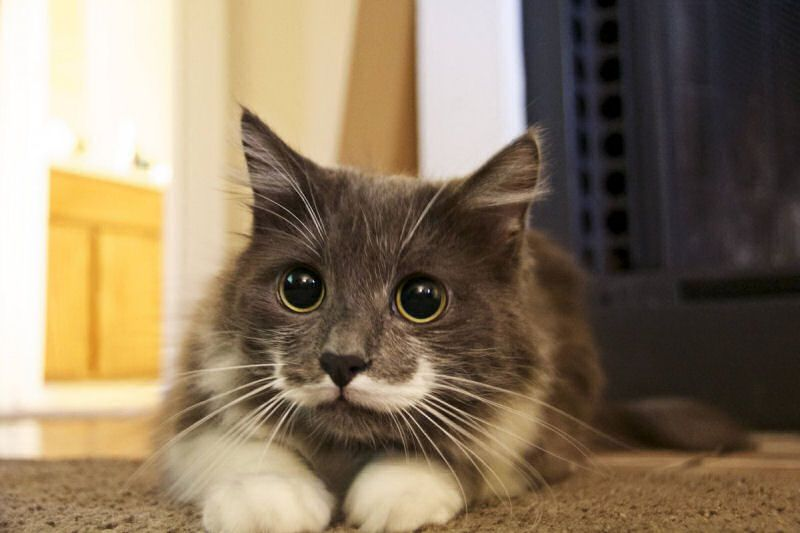 """The rescued cat also has thousands of Twitter followers and he starred in the Friskies music video """"Cat Summer"""" alongside Grumpy Cat and others"""