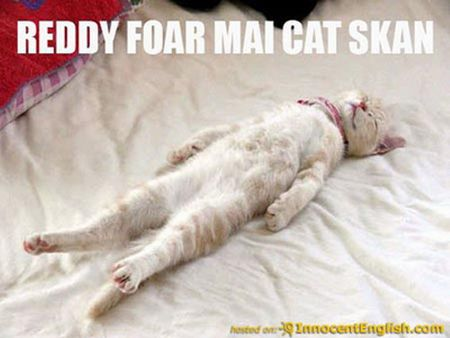 CAT SCAN scan ready funny cat