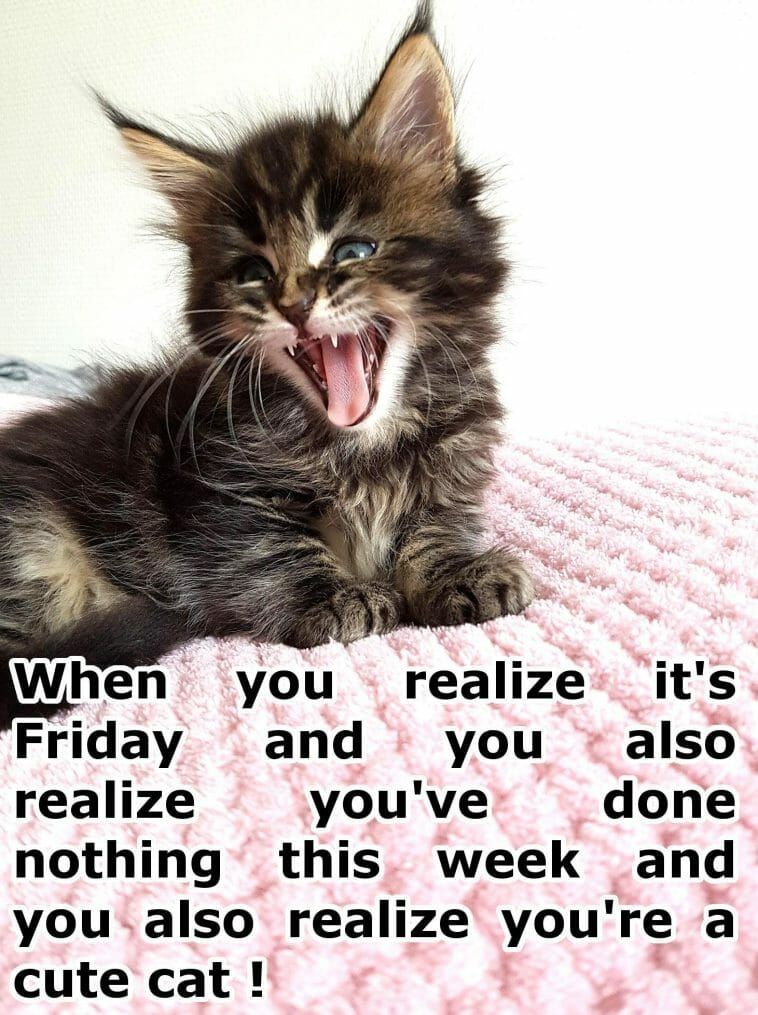 When you realize it s Friday and you also realize you ve done nothing this week and you also realize you re a cute cat