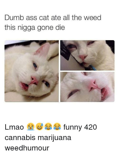 Ass Cats and Dumb Dumb ass cat ate all the weed this nigga