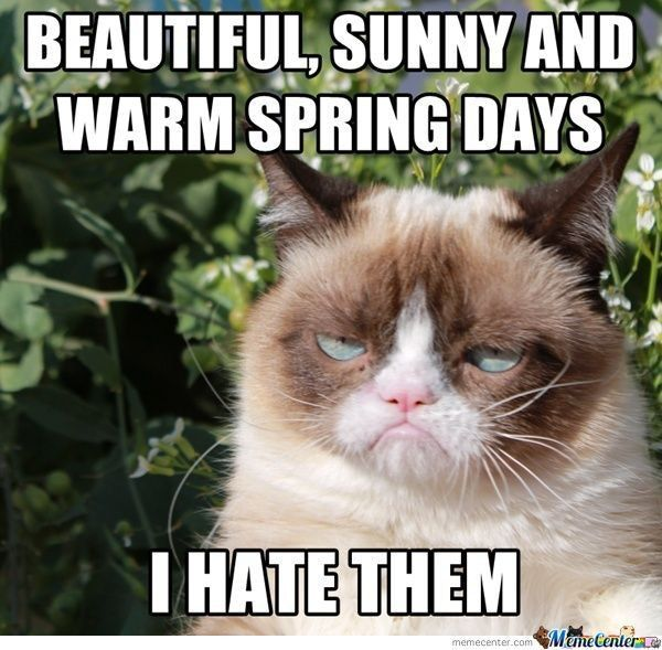 funny memes like these ones That s right it s cold outside — you don t have to feel guilty about lying in bed all day looking at Grumpy Cat memes
