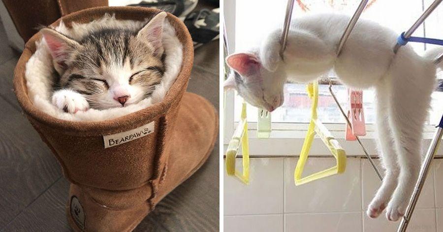 cats sleeping2