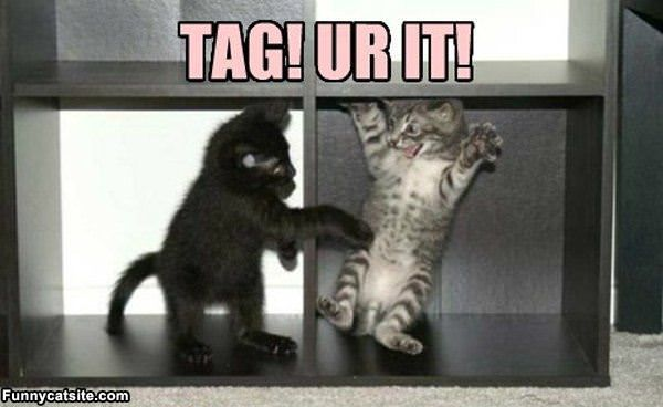 Pin Tags cat sup foo funny picture pictures images