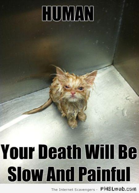 Funny wet cat meme at PMSLweb