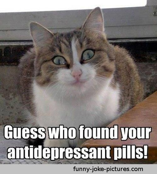 Funny Memes Does anyone s anti depressant pills actually work this well there seem to be very few true success stories