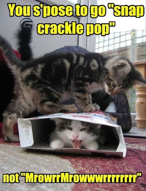 Funny Cat with Captions 43