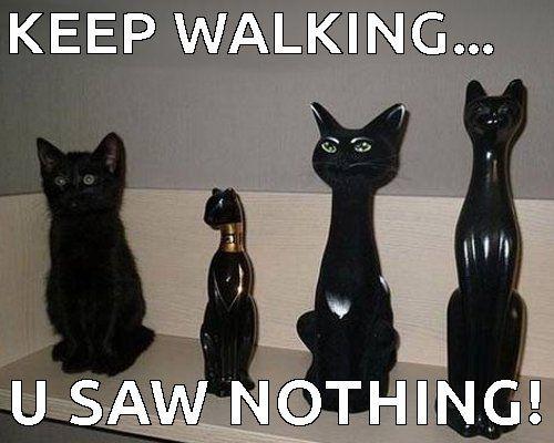 keep walking hoomin u saw nothing funny black
