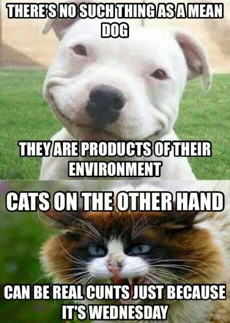 For all cat lovers here is collection of some really funny cat memes we hope you will enjoy them at your best