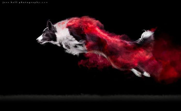 Canadian photographer Jess Bell he decided to invite his dog owning friends and their dogs in a colored powder photo shoot in order to experiment with a