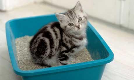 kitten with litter tray