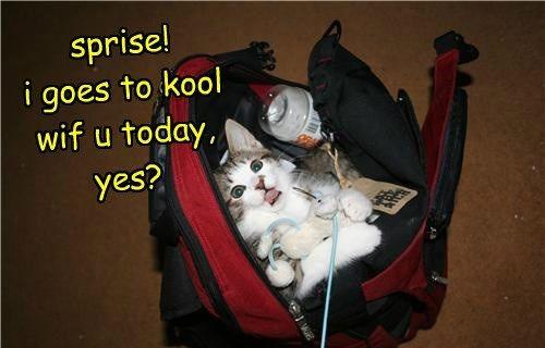 school s caption Cats
