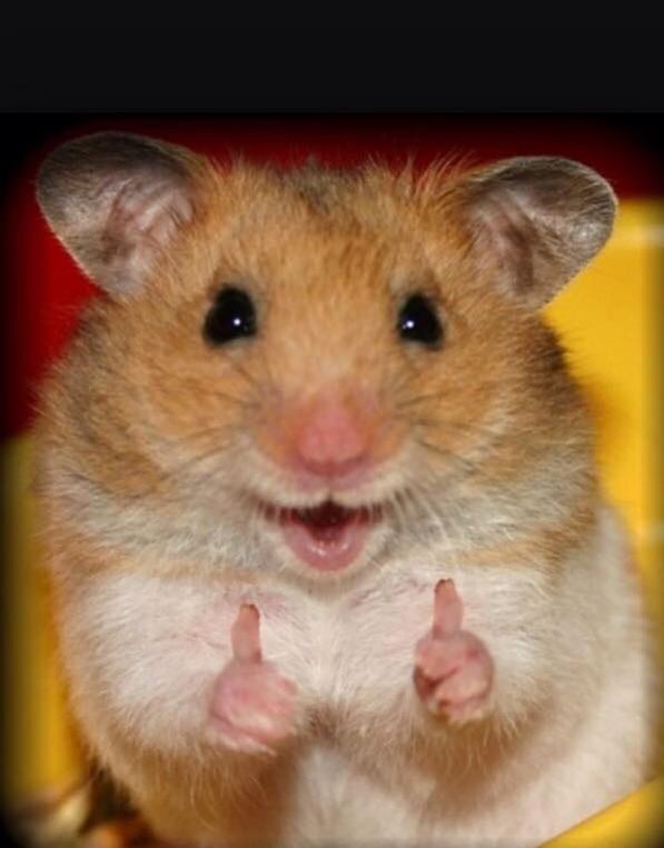 and also here s a thumbs up for the 98 followers