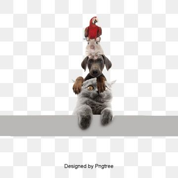 animal red dogs Animal Clipart Animal PNG and PSD