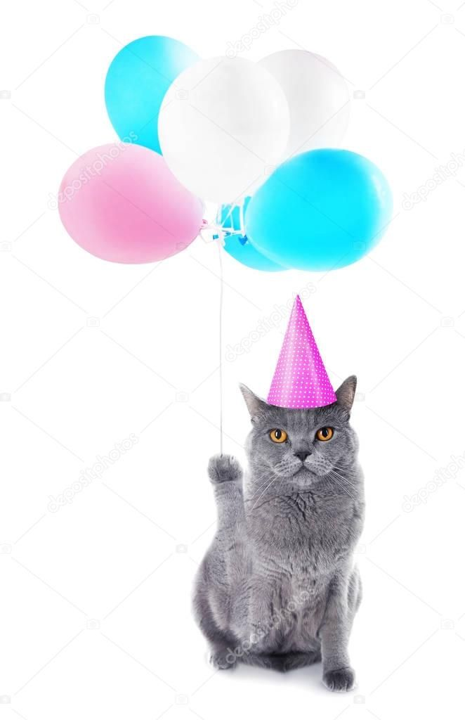 Funny cat in party cap with balloons — Stock