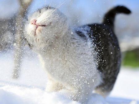 Winter cat cat winter shake nature funny animals