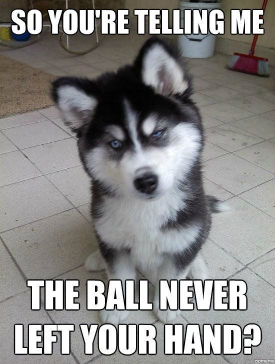 Cute Meme Corgi Puppy Okie & Mitt Pinterestpuppy Meme Puppypuppy Meme