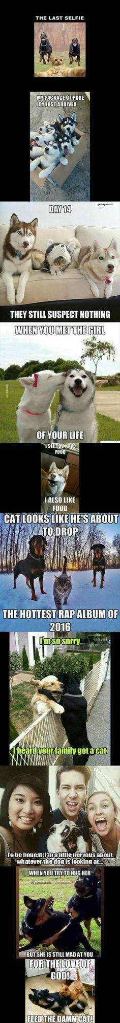 Top 10 Funniest Memes ft Funny Dogs And Cats Visited 156 times 2