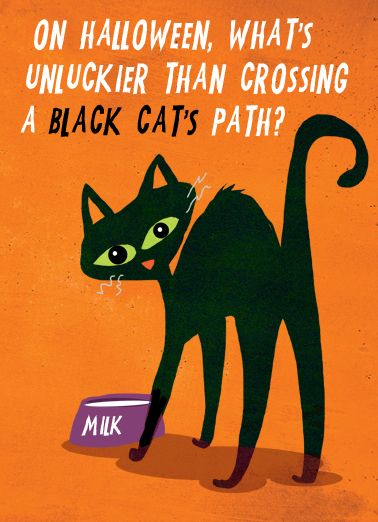 Unlucky Cat cover