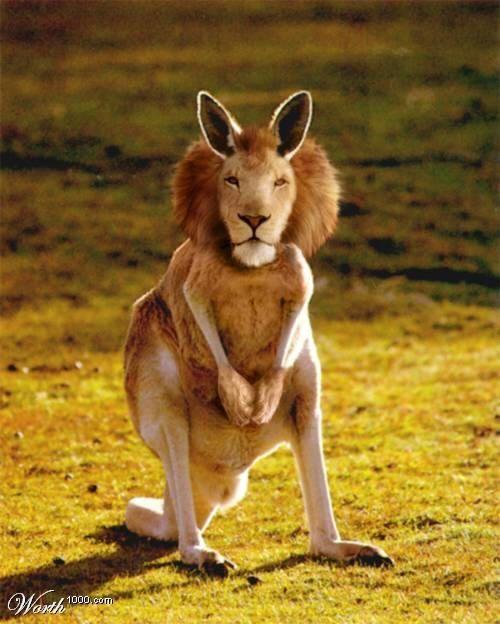 Langeroo or Kion Animal 2 Unusual Animals Rare Animals Funny Animals Strange