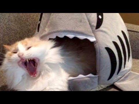 cat cats funny