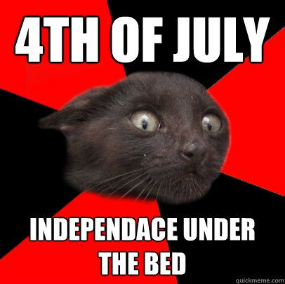 Grab the Best Of Funny 4th Of July Cat Memes
