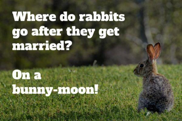 rabbit kids jokes pullquote