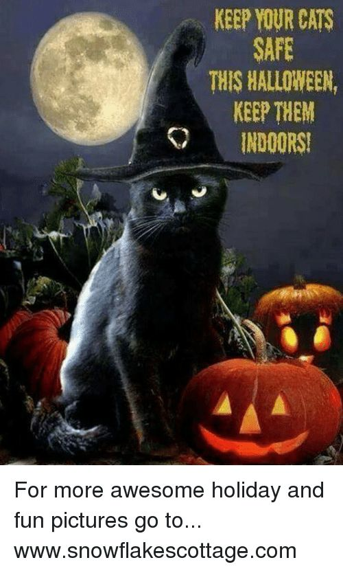 Halloween Memes and KEEP YOUR CATS SAFE THIS HALLOWEEN KEEP THEM