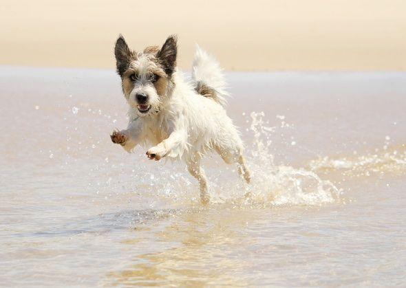 dog running in water istockphoto