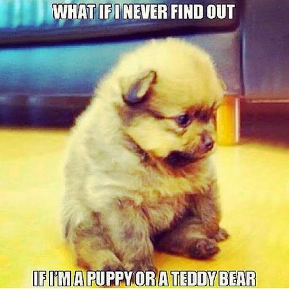 TOP 79 Funny and Cute Puppies Memes other items Pinterest