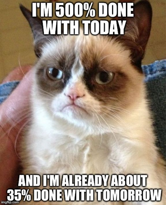 Top 40 most funniest grumpy cat pics Funny Humor