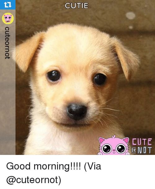 Relatable CUTIE 10h CUTE 0D cuteornot Good morning Via