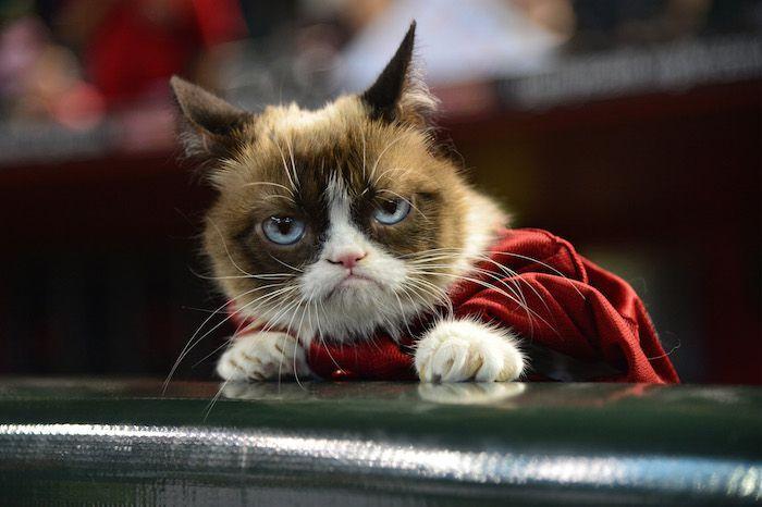 Grab the Elegant Funny Animal Memes Halloween