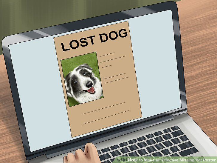 Image titled Make an Effective Missing Pet Poster Step 3