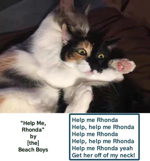 Lolcats 5 Lol Funny Cat Memes