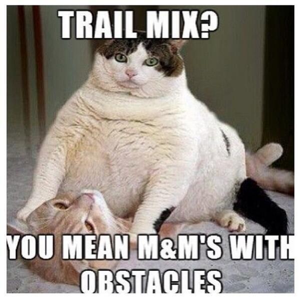 Grab the Elegant Funny Cat Memes Diabetes