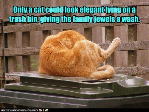 elegant bin clean trash wash captions family jewels Cats