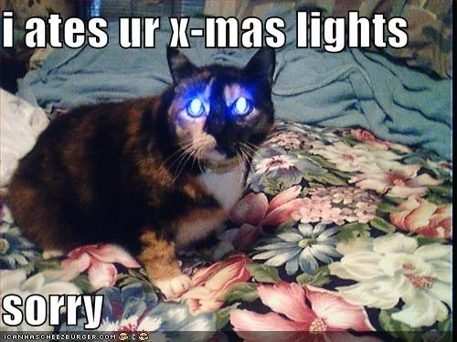 Best Christmas Cat Humor funny pictures Christmas Cat Humor pictures Christmas Cat Humor funny pictures Christmas Cat Humor funny pic Christmas Cat