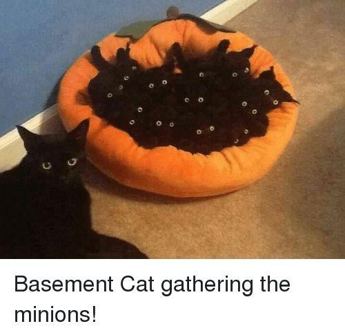 Funny Cat and Rest U O Basement Cat gathering the minions