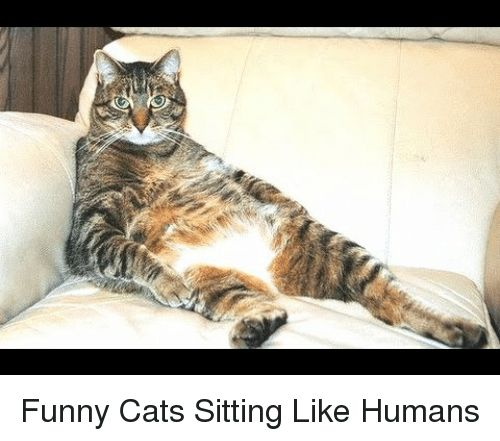 Cats Funny and Like Funny Cats Sitting Like Humans