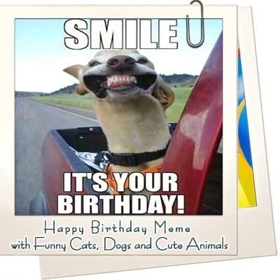 Happy Birthday Memes with Funny Cats Dogs and Cute Animals – WishesQuotes