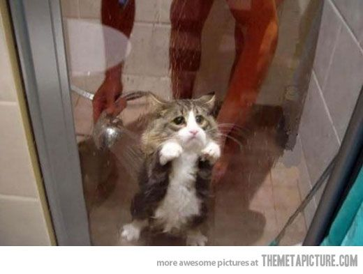 funny cat crying shower