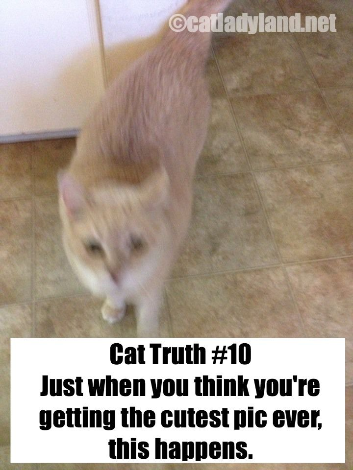 Grab the Fascinating Funny Cute Cat Pictures with Captions