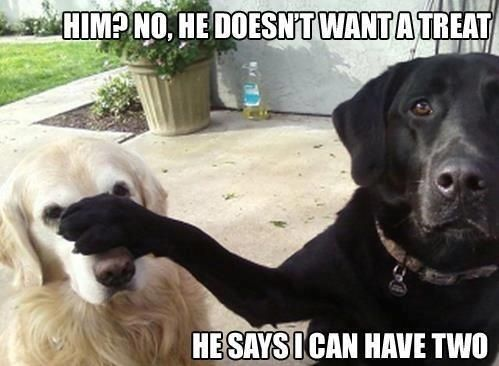 Funny Dog with Captions