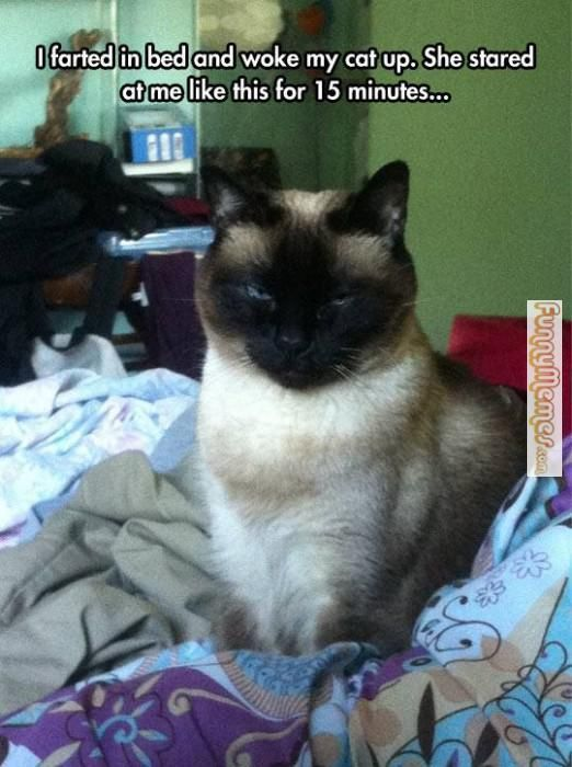 Cat memes I farted in my bed