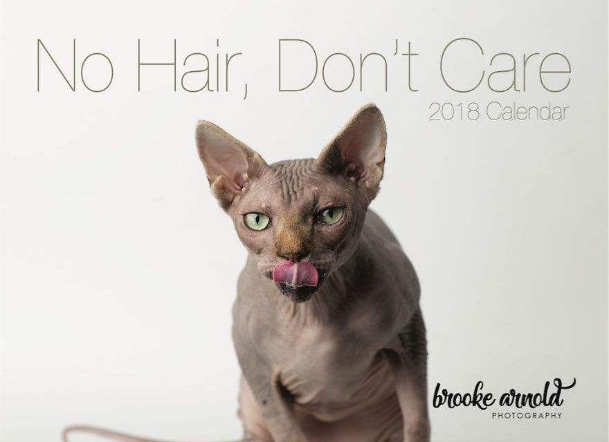 Funny bald cats designed to make your day