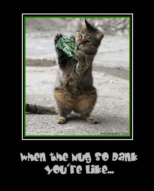 Dank nug cat Weedmemes
