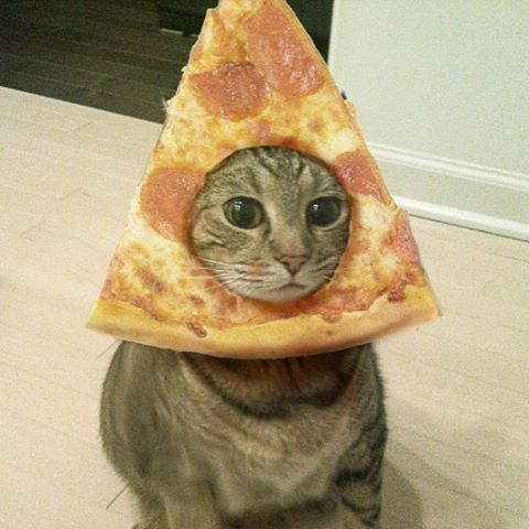 Cat pizza 2016