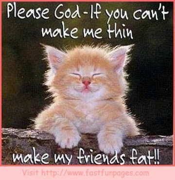funny cat pictures with sayings funny and cute cats gallery
